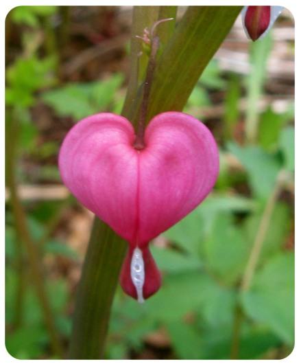 heart-flower-rounded